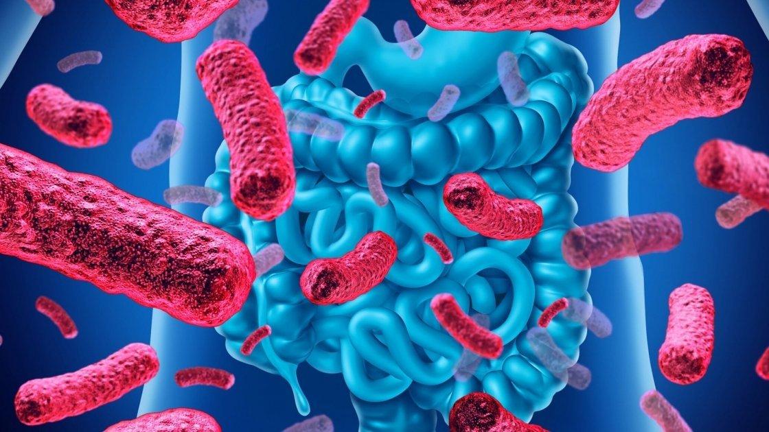 Cómo las bacterias pueden protegernos del coronavirus (y de todos los demás virus). Entrevista a la Dra. Anne Katharina Zschocke