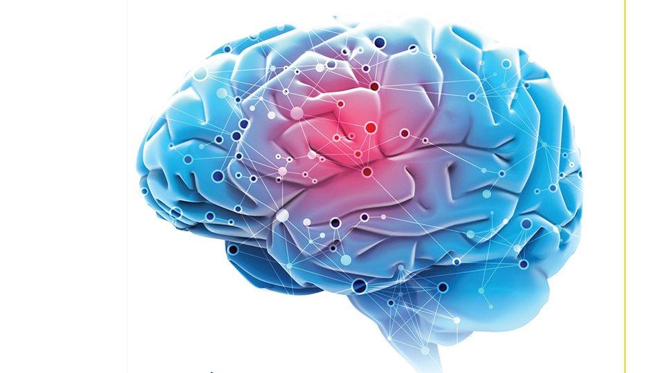 El Poder del Cerebro Cuántico: esto es lo que es (y lo que no es)