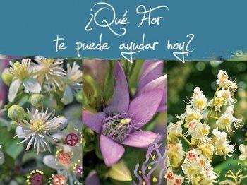 La ayuda diaria de las flores de Bach