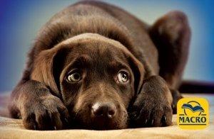 Las tipologías de Veterinarios y la salud de nuestras mascotas