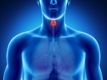 La dieta adecuada para hipotiroidismo y otros problemas de tiroides